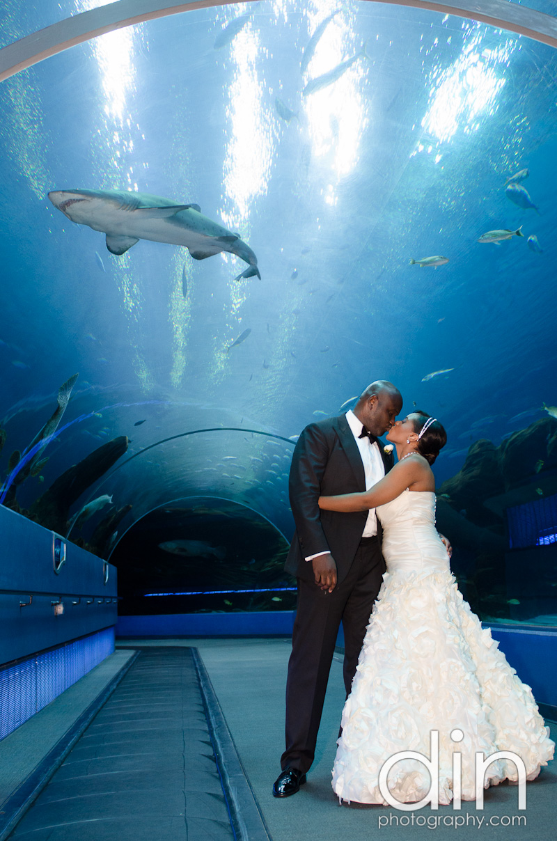 Abdul & Nya - Georgia Aquarium | Atlanta Wedding Photographer (59)