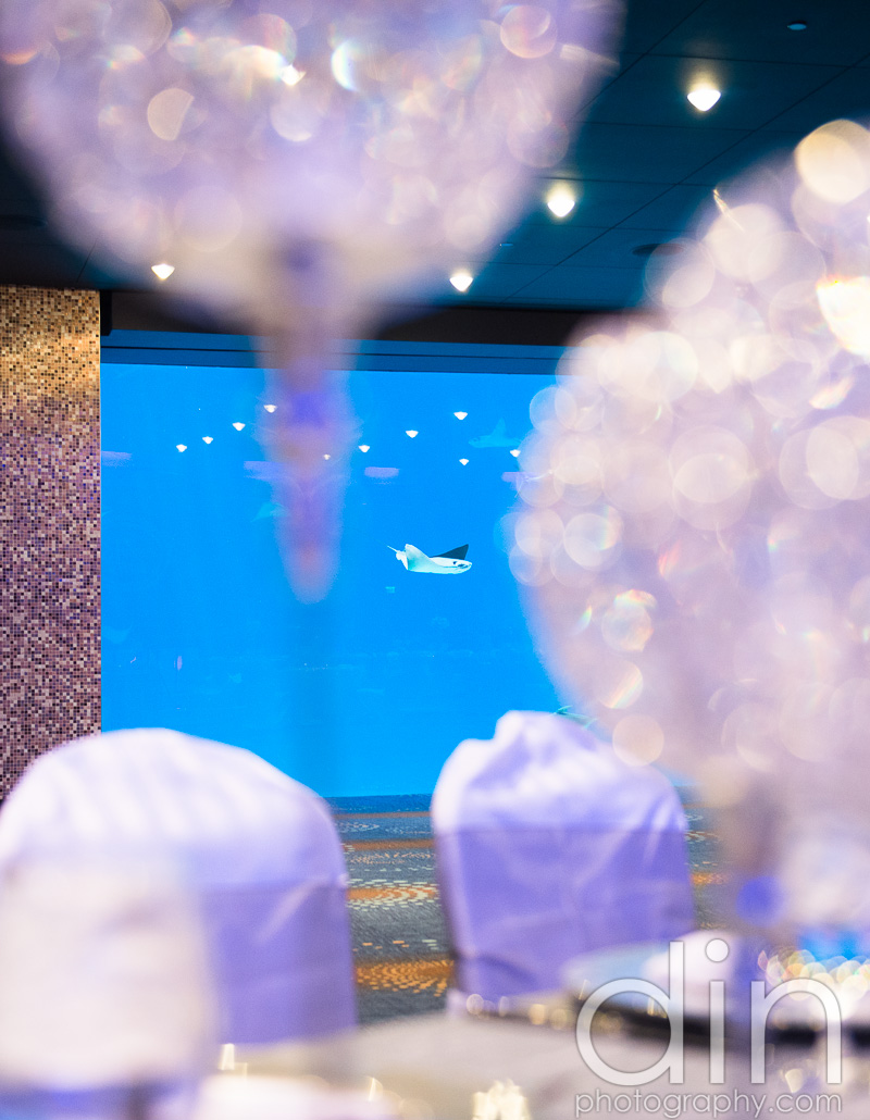 Georgia Aquarium wedding